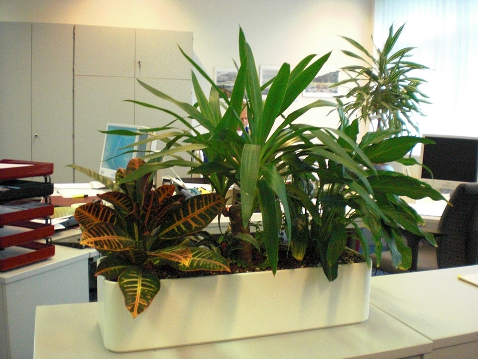 Innenraumbegr nung eckstein sommer gmbh for Pflanzen innenraum